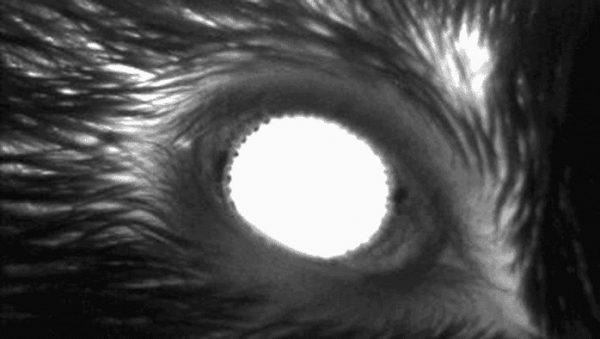 dilatation pupille sommeil