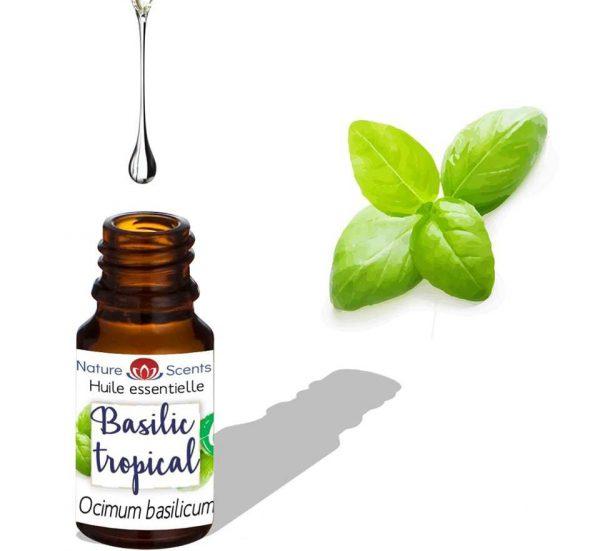 huile basilic tropicale