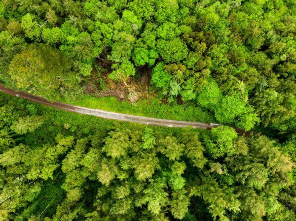 Les limites de la reforestation
