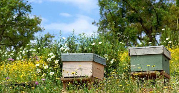Le meilleur endroit pour placer une ruche