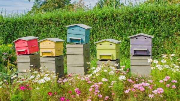 Respecter les distances réglementaires d'implantation de ruche