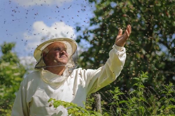 Suivre une formation dans l'apiculture